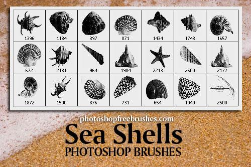 Sea Shells Free PS Brushes