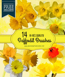 14 Cheerful Daffodil Flower Brushes