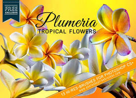 13 Tropical Plumeria Flower Brushes by fiftyfivepixels