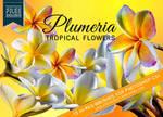 13 Tropical Plumeria Flower Brushes