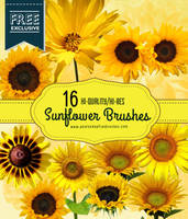 16 Realistic Sunflower Photoshop Brushes by fiftyfivepixels