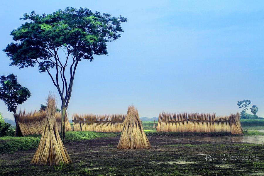 Field Of Gold by yearuzzaman
