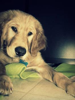 Puppy Curiosity