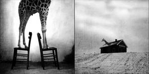a giraffe is to big for home by natdatnl