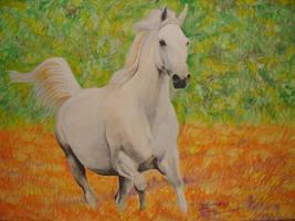 Horse by zaboss3