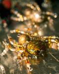 Lucky Christmas Spider by WanderingMogwai