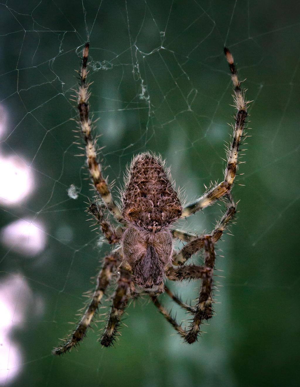 Barn Spider Vt By Wanderingmogwai On Deviantart