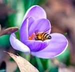 First Honeybee 2018