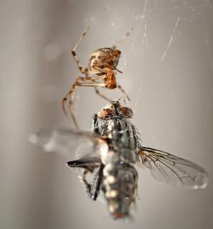 Windowsill Spider by WanderingMogwai
