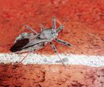 Big Ass Assassin Bug - 10.03.18 by WanderingMogwai