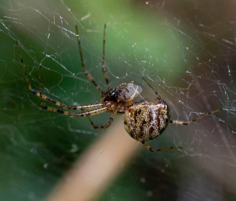 spider 04.20.21
