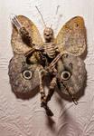 Owl Eyed Fairy - 07.30.21