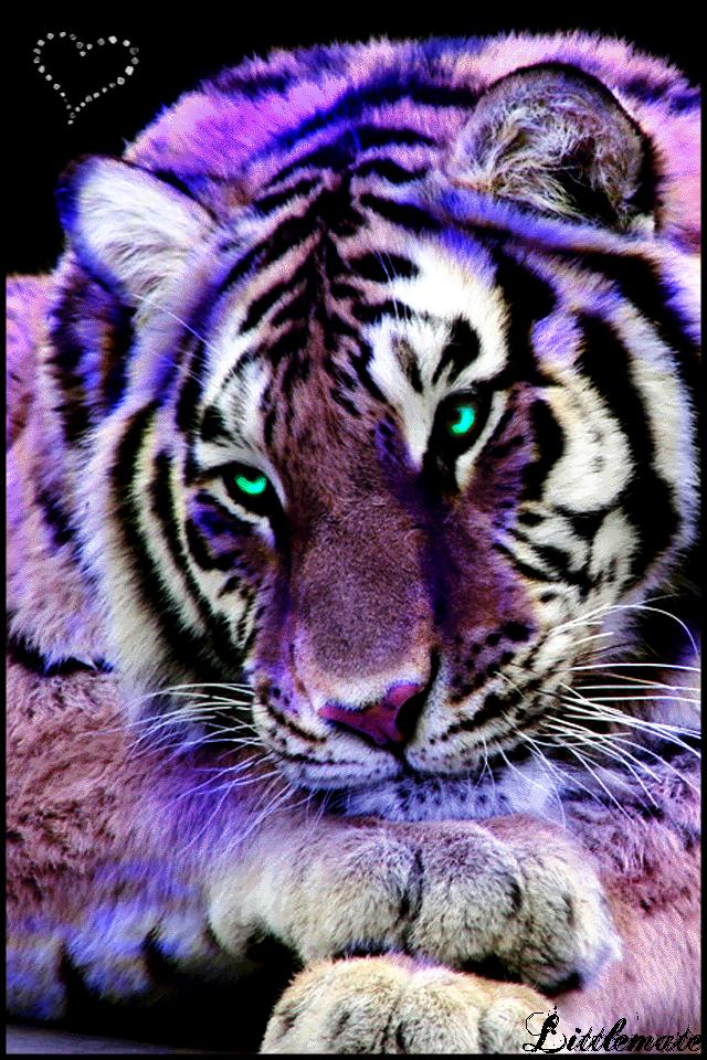 Purple Tiger Stargazer Nail Art Designs By Top Nails