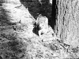 Squirrel Buddy