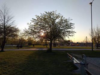 Sun behind the bigger tree by FeatherAmbara