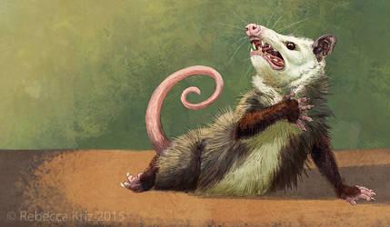 Amateur Opossum Actress