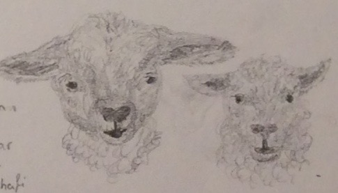 Two lambs, two breeds by LunaRedwing