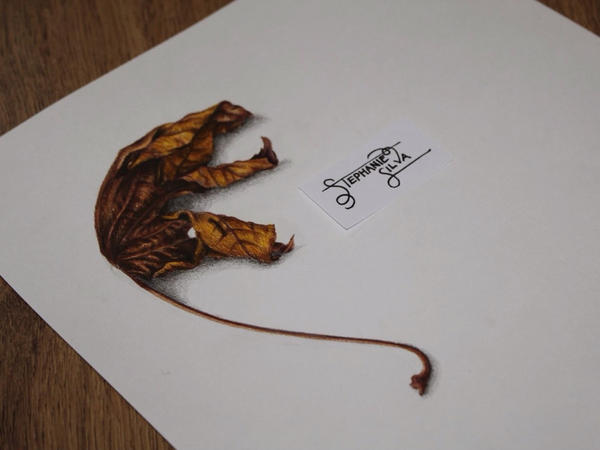 Leaf Drawing by SteffieSilva