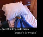 SpirkyinTheHospital by Gatewhale