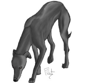 Black Whippet by FrightRat