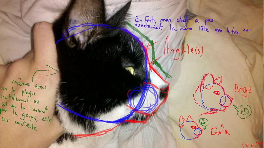 Cat head anatomy. by FrightRat on DeviantArt