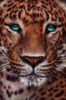 Chinese Panther by giselleukardi