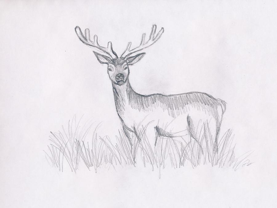 Line Drawing Deer : Indian muntjac deer muntiacus muntjak line art and full color