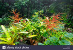 Blooming-bromeliads-and-wild-ginger-in-tropical-ra by Brissinge