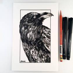 Inktober Day 5 - Raven by D-MAC