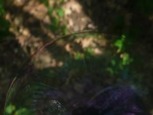 Kenshin--Kenshin's Profile Picture