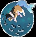 Aqua shep