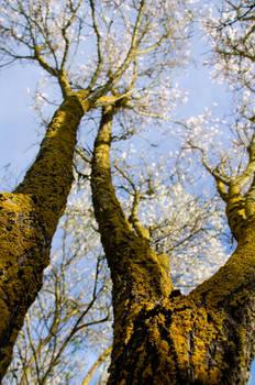 Under the Almond Tree