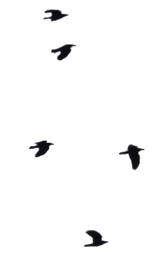 Birds One :: PNG Stock