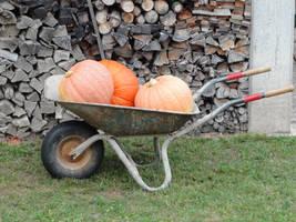 Pumpkin 01 :: Stock by Selunia