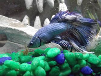 Curious Fishbeastie by Syrazel-NightRose