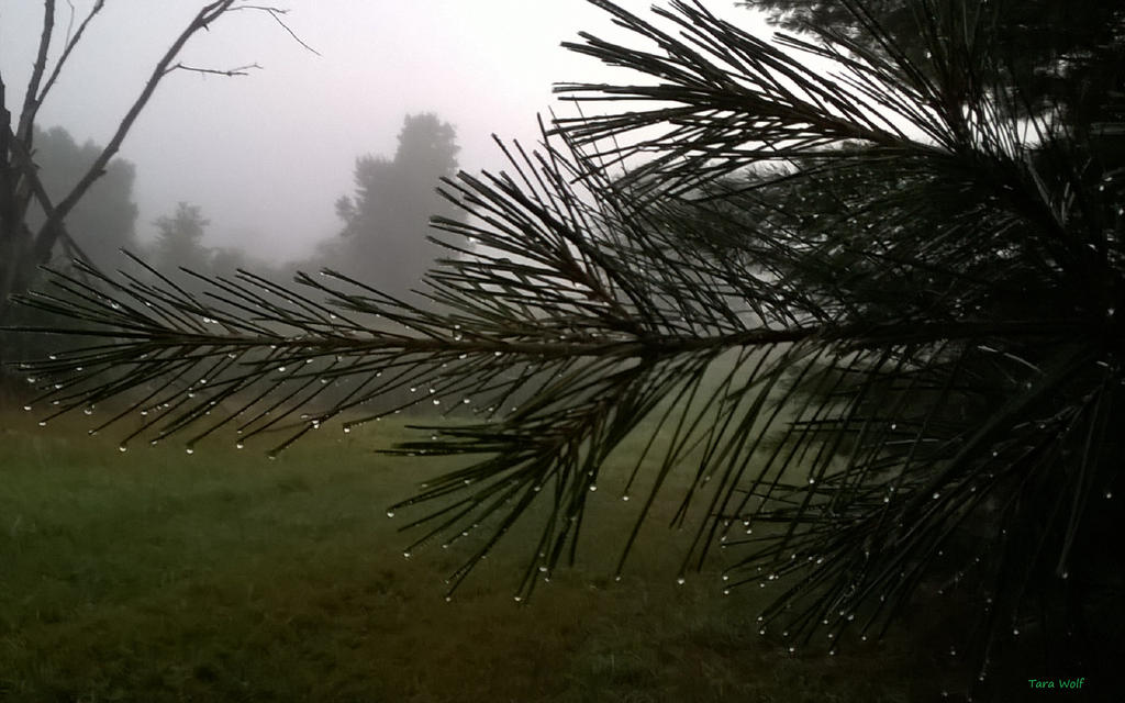 Dew On The Pines by seaglasshunter