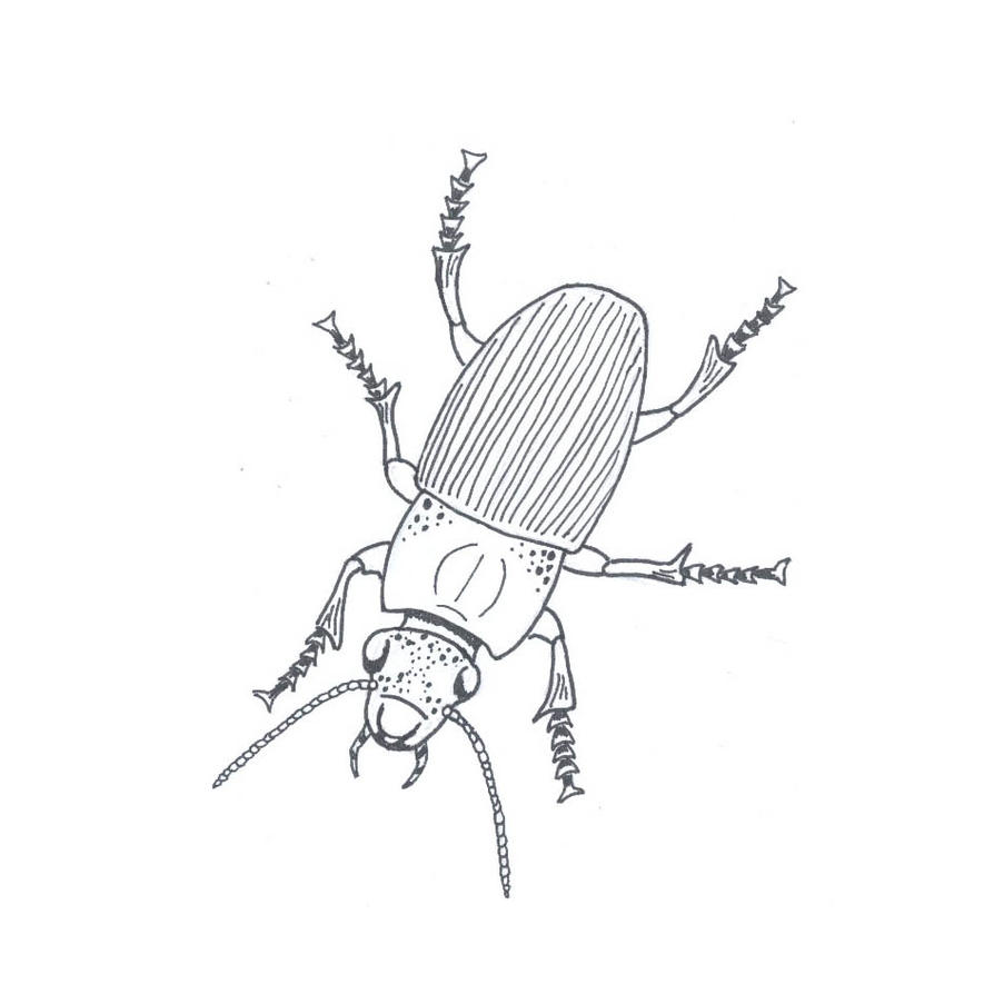 Line Drawing Vs Value Drawing : Beetle line drawing by fuzzbunny on deviantart