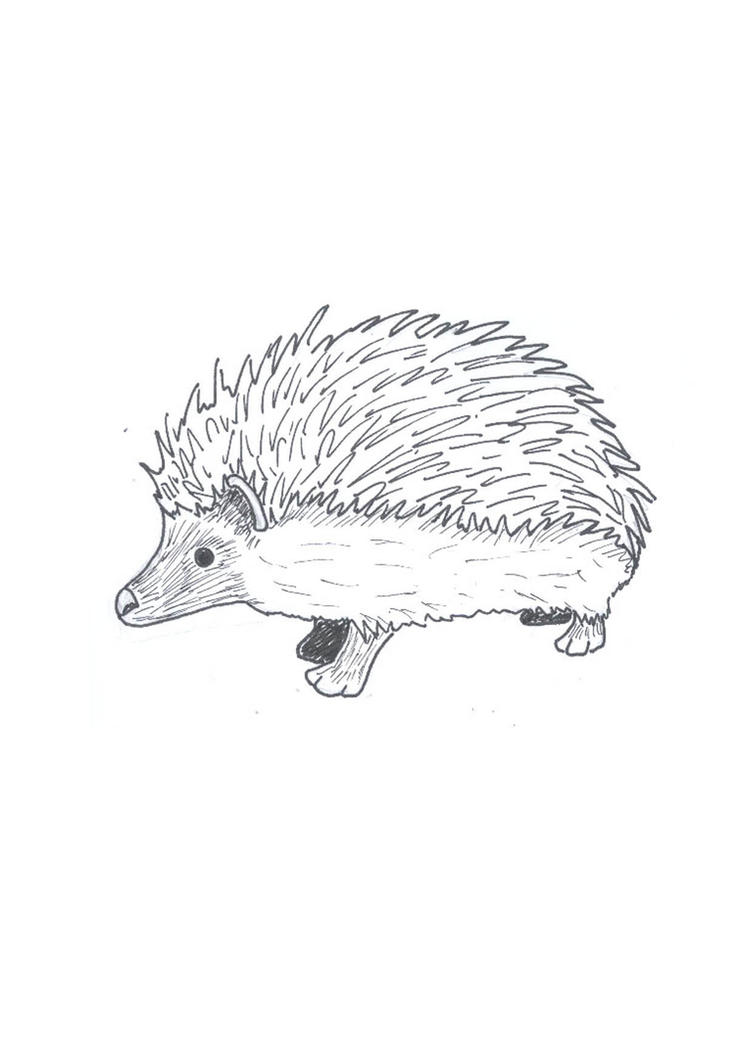 Line Drawing Hedgehog : Hedgehog line drawing by fuzzbunny on deviantart