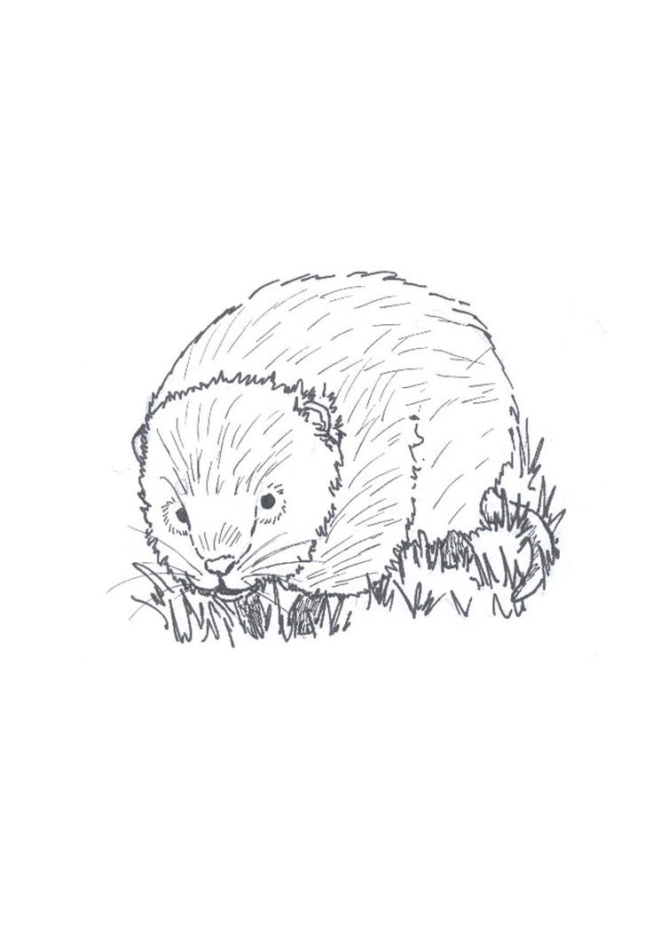 Line Drawing Water : Watervole line drawing by fuzzbunny on deviantart
