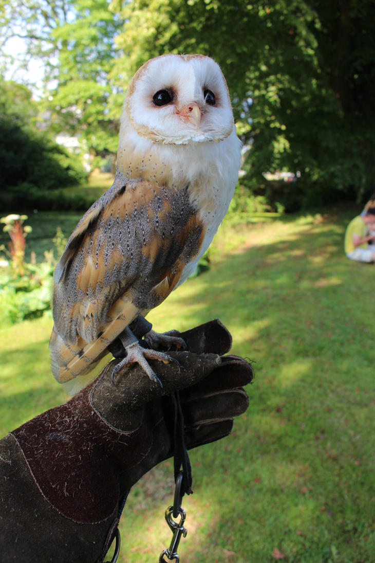 owl on my hand by damenster