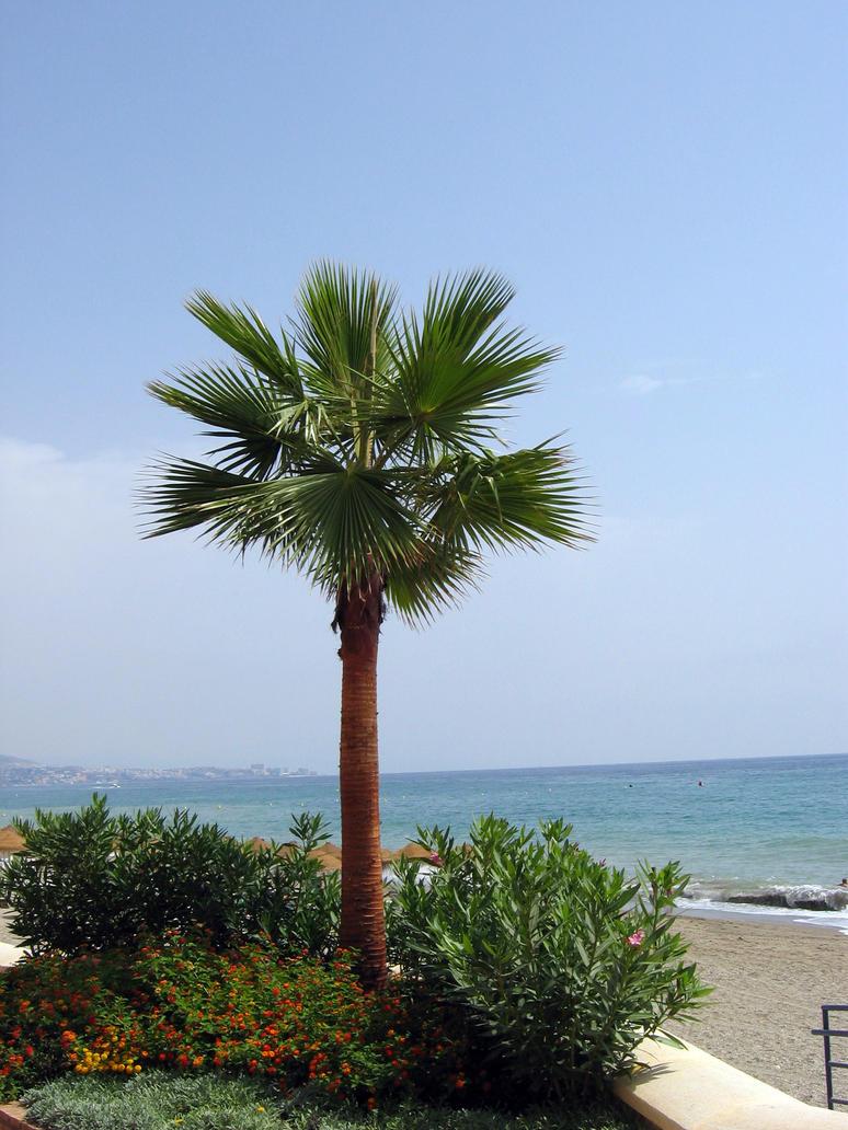 Palm Tree by LiQuidFireSTOCK