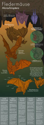 Info Graphic: Bats