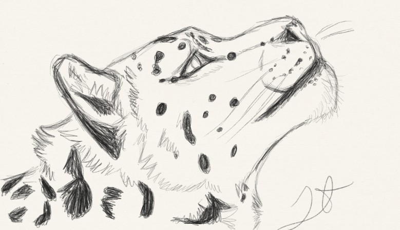 Snow Leopard: Commission by NatsumeWolf ...