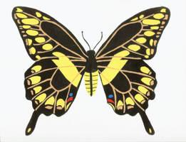 Giant Swallowtail by xxxfallenskyxxx