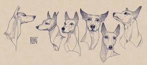 Sketches of the Xoloitzcuintle