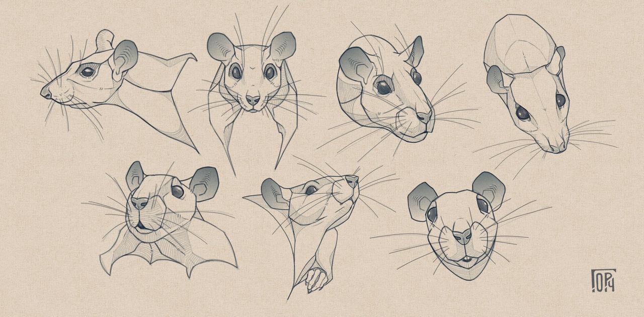 Rats_sketches