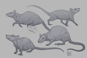 Simple rat`s sketches