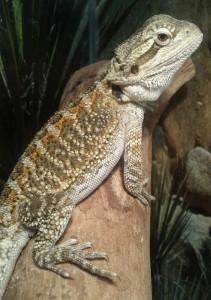 kr0mat1k's Profile Picture
