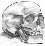 omg, it's a skull.
