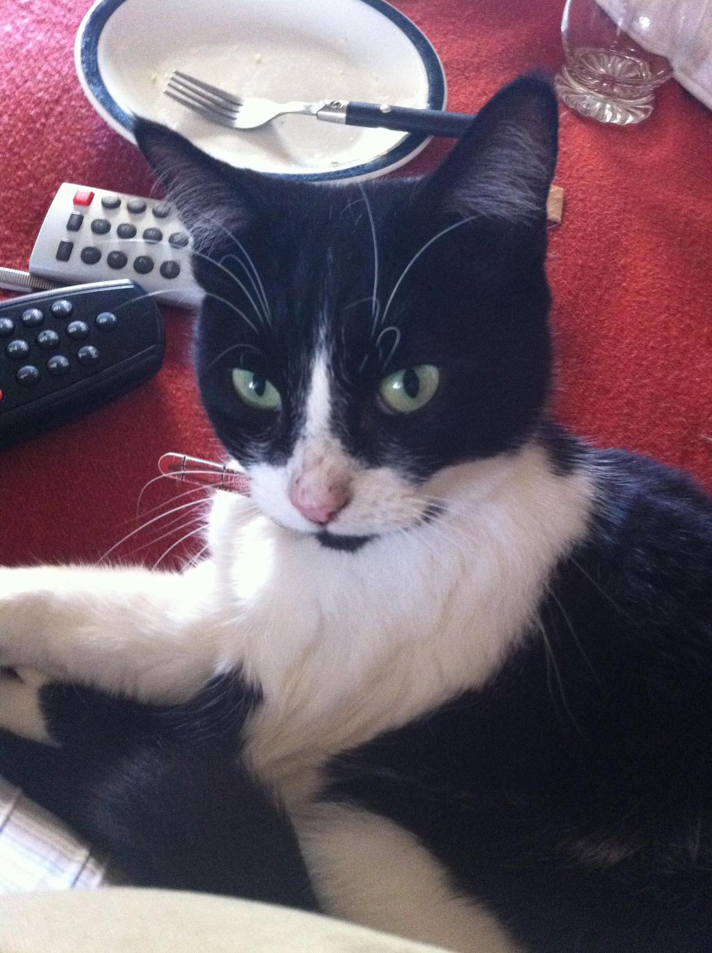 My cat - Nala by kazza-spexy